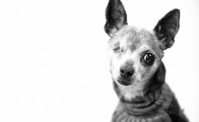disabled_dog