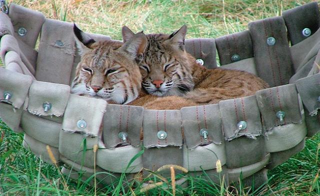 wildcats_scooter