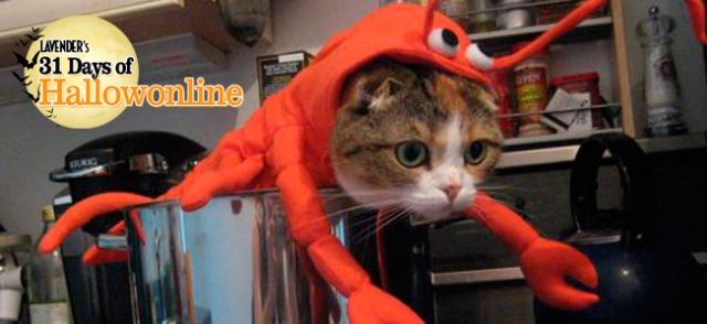 Pet-Costumes-Hallowonline