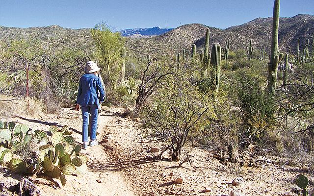 Cacti-Photowalk