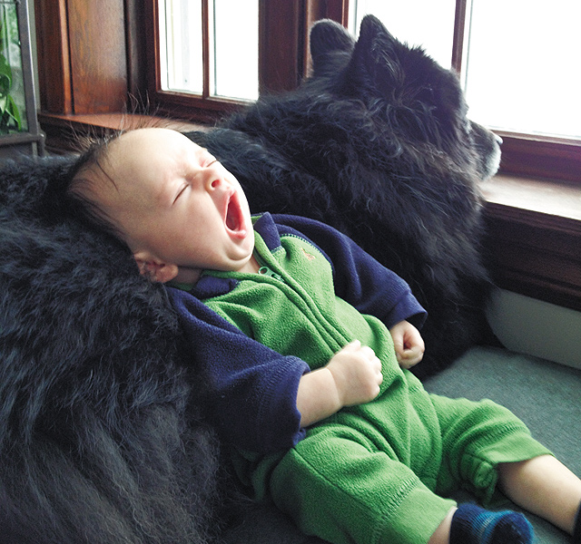Two-month-old Hugo napping on the family Chow, Ursa. Photo courtesy of Chris and Anders