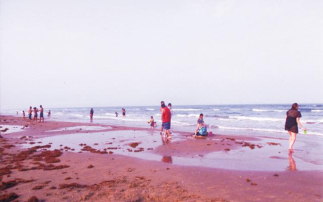 Sugar sand beach. Photo by Carla Waldemar
