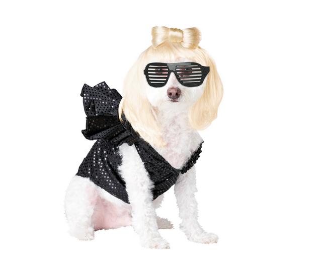 Pets Lady Gaga