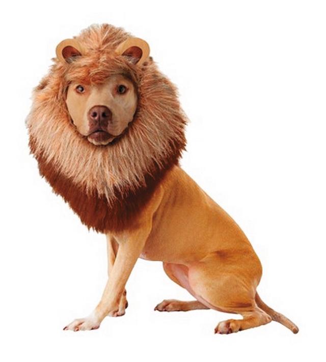 Pets Lion
