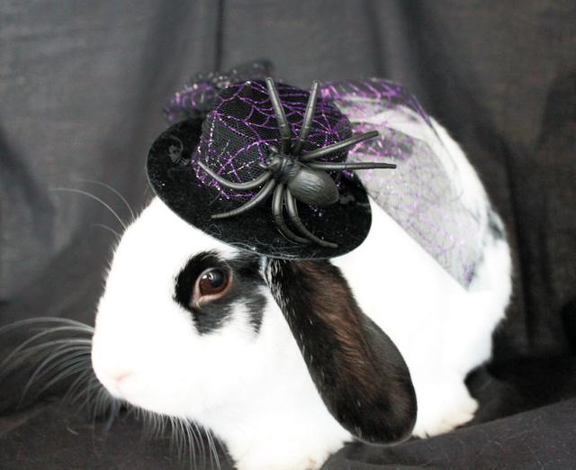 Pets Spider Hat