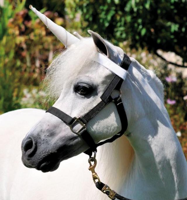 Pets Unicorn