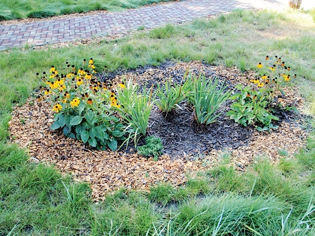 An Attractive and efficient Rain Garden. Photo Courtesy of Michael Anschel