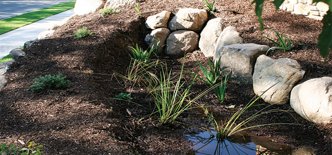 """The Grass That's """"Greener"""": Sustainable Landscaping for City Living"""
