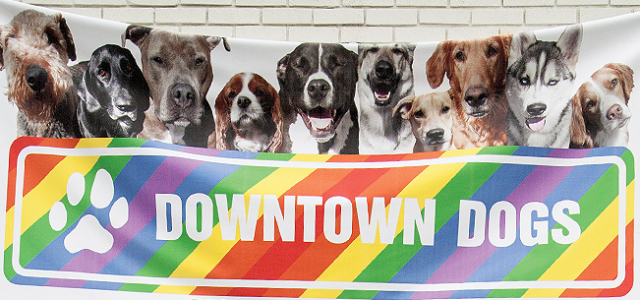 downtown-dogs-feature