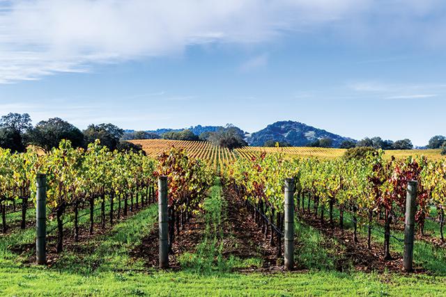 Vineyard in Alexander Valley, California. Photo courtesy of wollertz/Bigstock.com