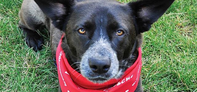 Animal-Rescue-Dog