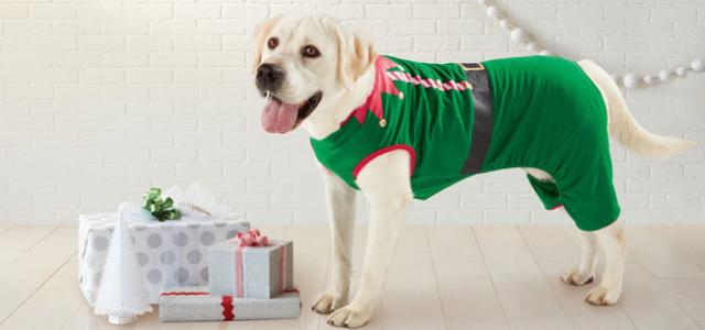 Elf-Pet-Pajamas2