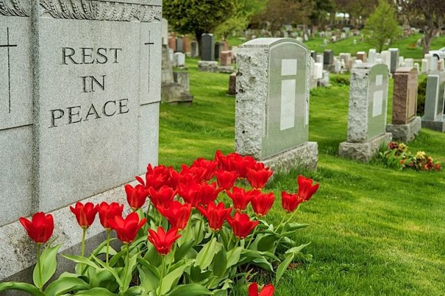 """Headstones in a cemetery with red tulips and """"rest in peace"""" inscription."""