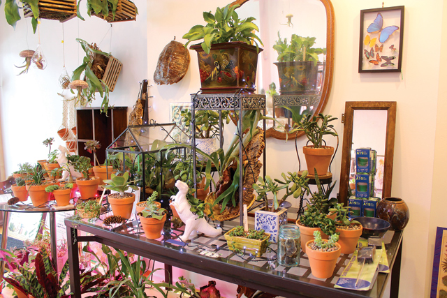 Fractal Cactus offers free and paid classes on taking care of succulents and properly maintaining plant life.