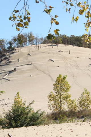 A view through trees up a dune at Warren Dunes State Park.
