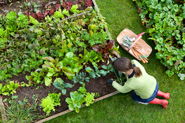 Grow-fresh-flavors-for-your-table-with-veggies-and-herbs_Photo-courtesy-of-Bachman's