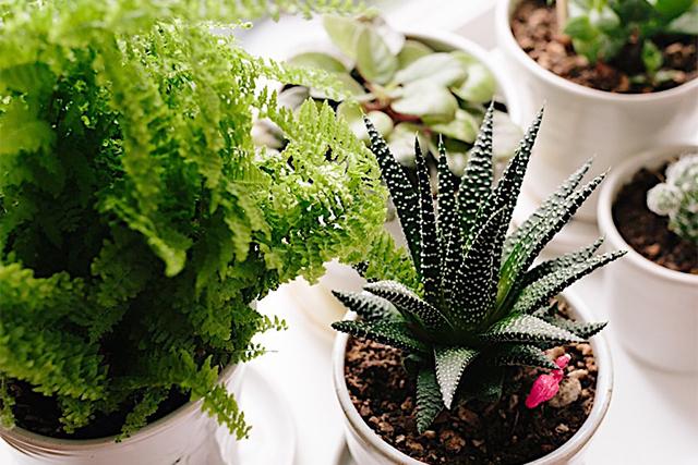 Photo-03-Green-Plant